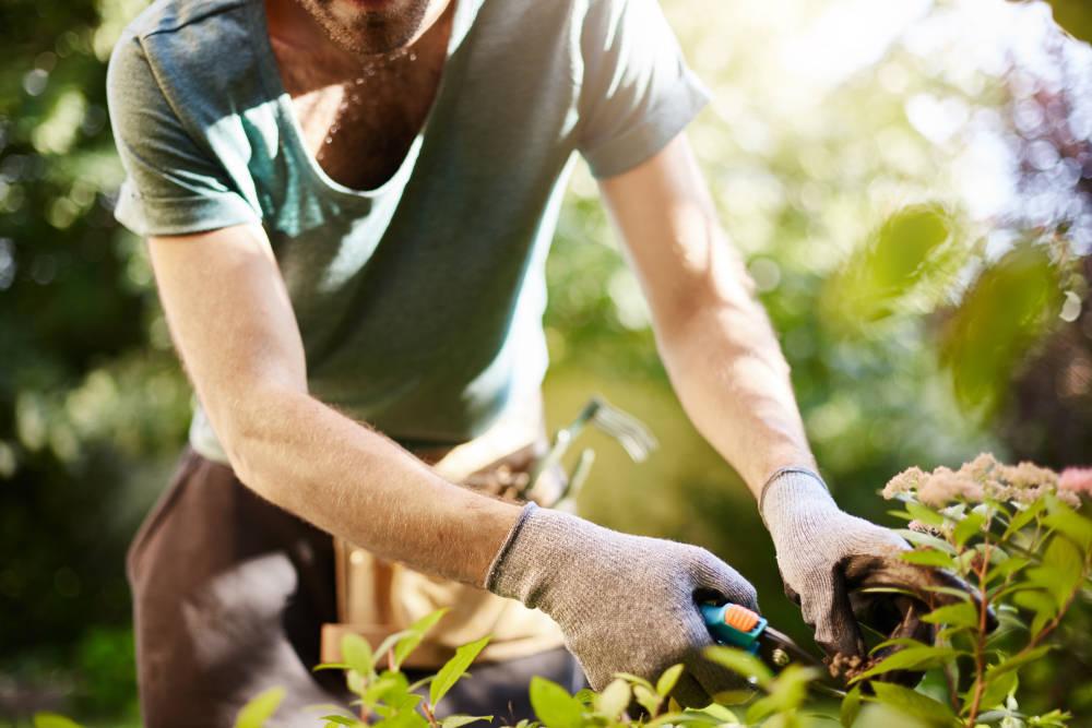 Dónde encontrar una buena empresa que se ocupe de tu jardín